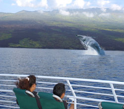 whale-watching-boat-tour